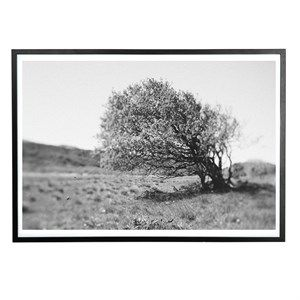 Applicata - Plakat - Windy tree - 30x40 cm